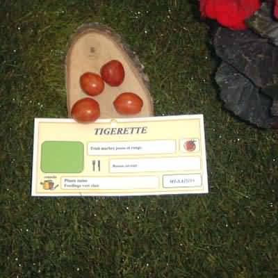 tomate Tigerette