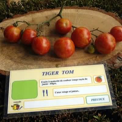 tomate Tiger Tom