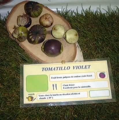 tomate Tomatillo Violet