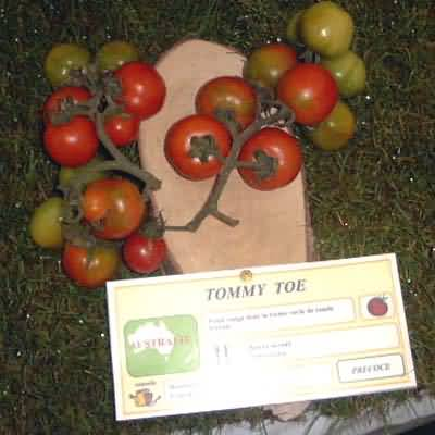 tomate Tommy Toe