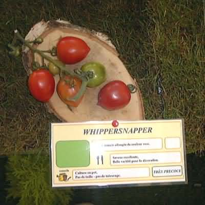 tomate Whippersnapper