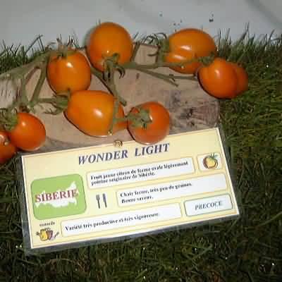 tomate Wonder Light