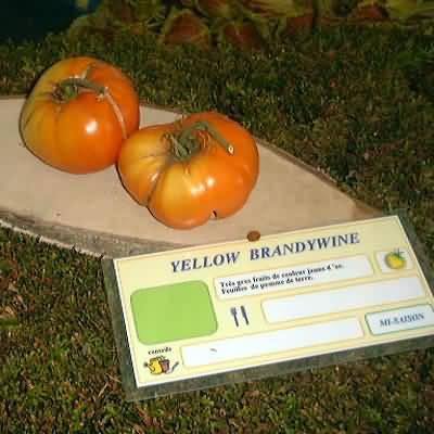 tomate Yellow Brandywine